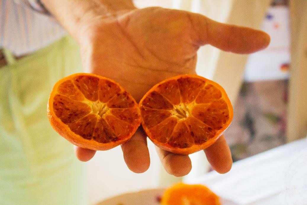 Sicily citrus blood oranges