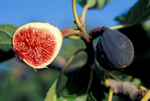 Figs – History and Recipe