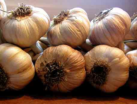 Garlic – A Stinking Rose by any other name…! Story and recipe