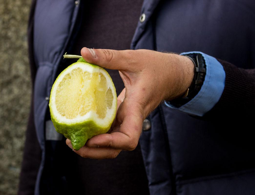 Sicily citrus green lemon