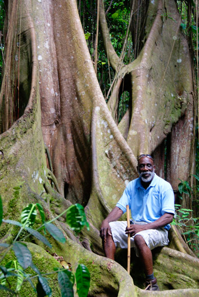 st Kitts forest