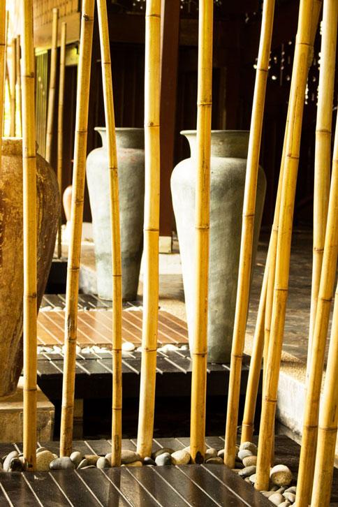 Malaysia bamboo