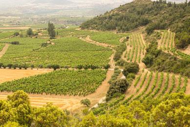 Remelluri vines
