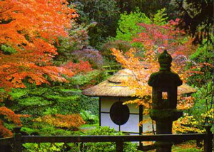 Serene Gardens by Yoko Kawaguchi – review