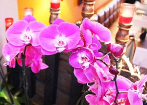 Patara Thai Restaurant, Knightsbridge – review