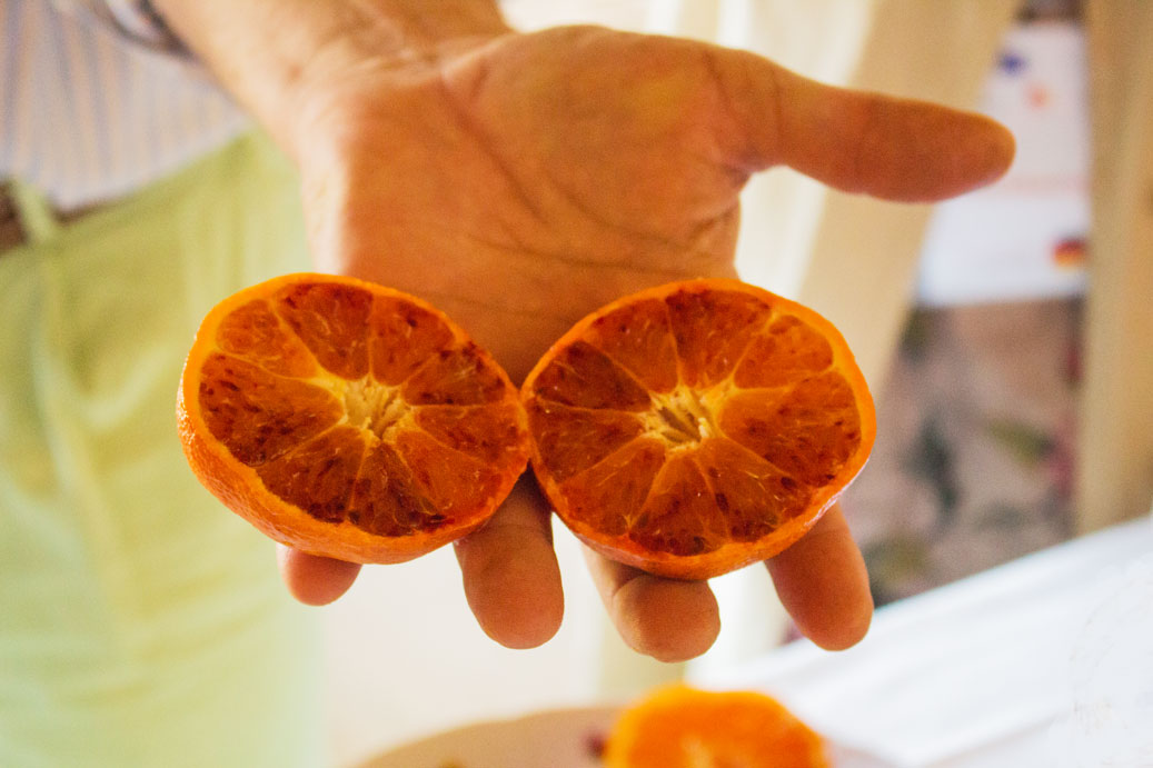 A Citrus History of Sicily – travel review