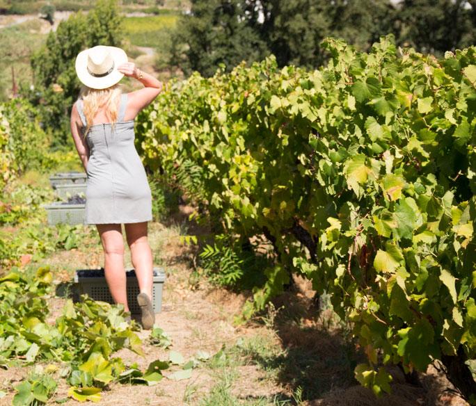 Portugal Douro Vines fashion