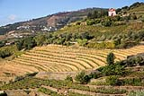 Portugal Douro Vines