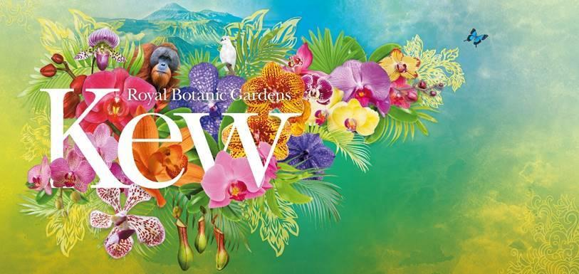 Kew Orchid Festival 2020: Indonesia
