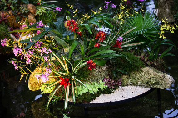 orchid pond