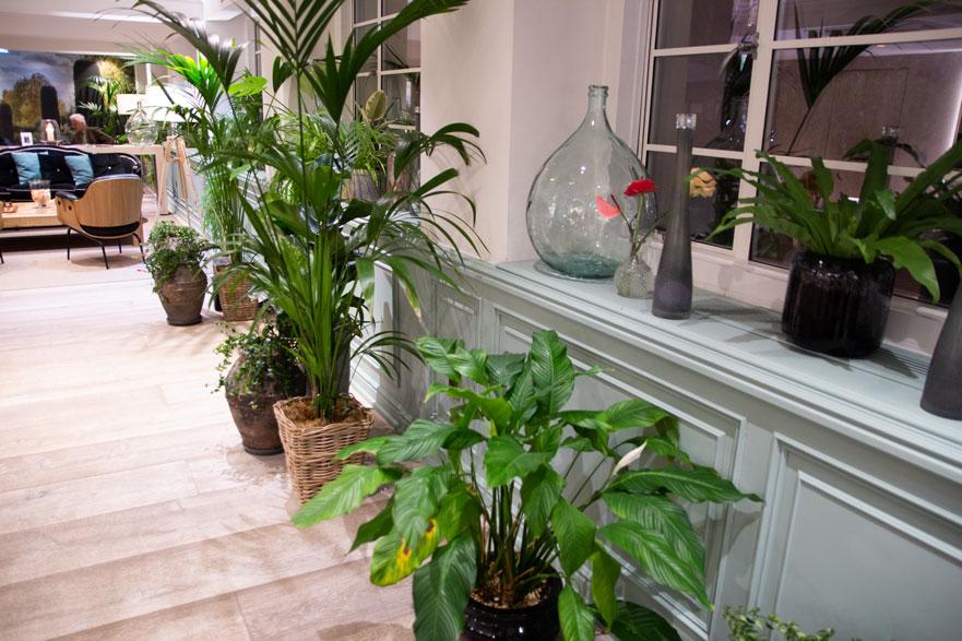 white house melia plants